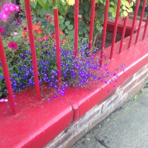 the exceedingly cute door and adorable garden down the road